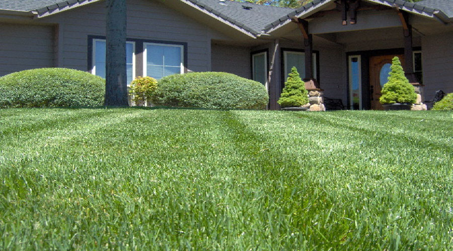 lawn king inc case study Case assignment lawn king inc tyler merriweather mgt 4352 09/25/2017 executive summary lawn king company is a manufacturer of lawn mowers lawn mowers are machines with one or more blades that are used to cut lawns at an even level.